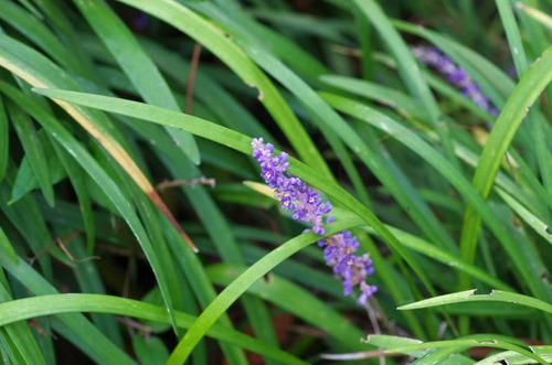 散歩道の花8月2012-4