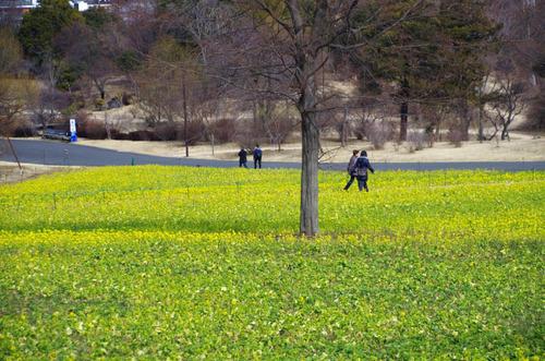昭和記念公園201302-11