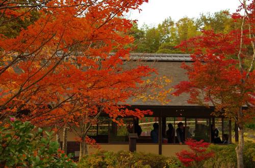昭和記念公園紅葉201211-8