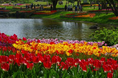 昭和記念公園201304-3