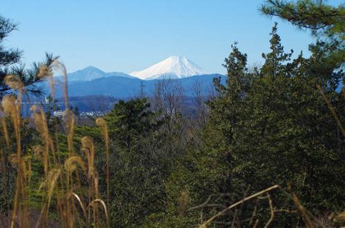 昭和記念公園201501-10