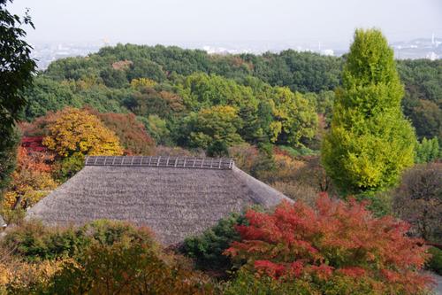 百草園201011-6