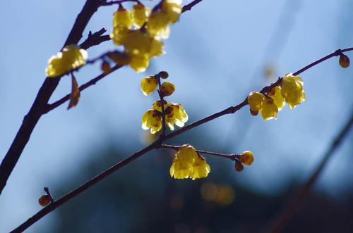 昭和記念公園201401-5