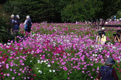 昭和記念公園201010-3
