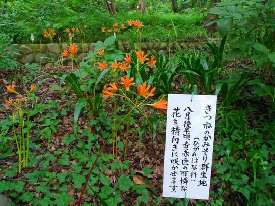 高幡不動尊090801-7