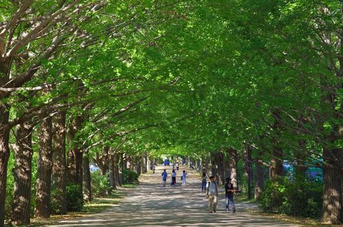 昭和記念公園201310-11