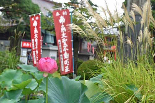 高幡不動尊201508-9