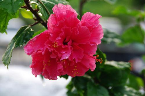 沖縄201008-5