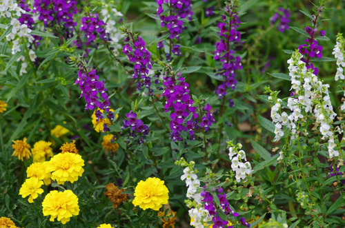 昭和記念公園201208-4