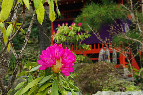 高幡不動尊20100328-9