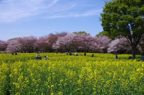 昭和記念公園201104-5