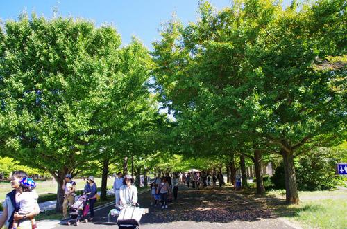 昭和記念公園201310-12