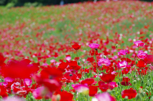昭和記念公園201205-4