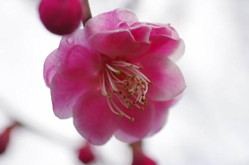 京王百草園20120303-4