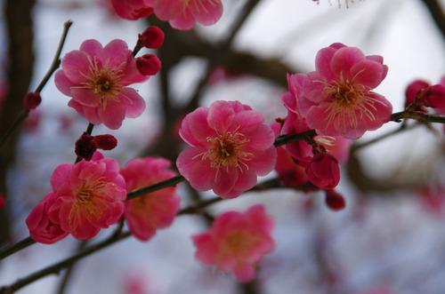 昭和記念公園201102-7