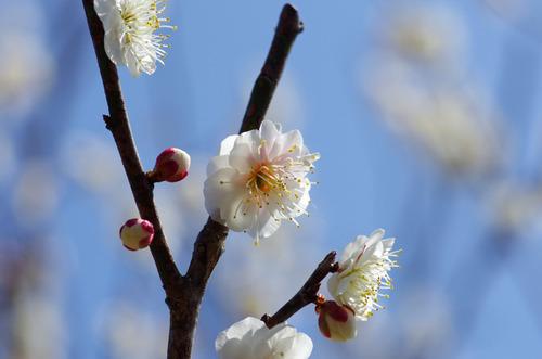 昭和記念公園201203-6
