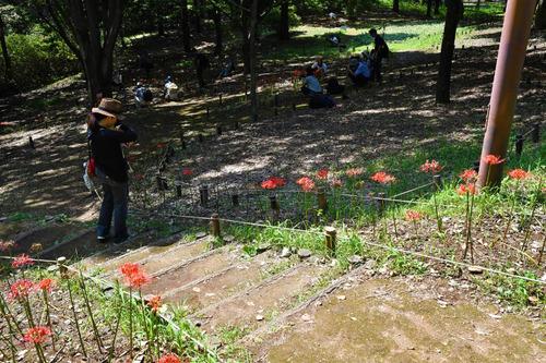 昭和記念公園201609-5