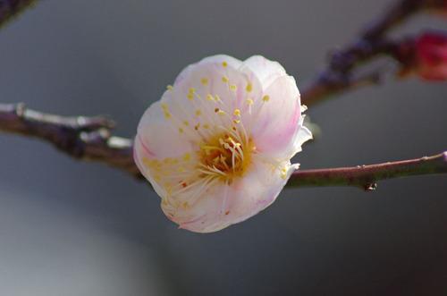高幡不動尊20110213-4