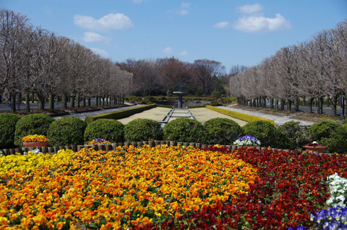 昭和記念公園201103-2