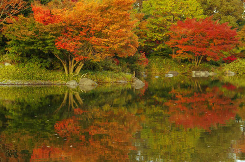 昭和記念公園紅葉201211-2