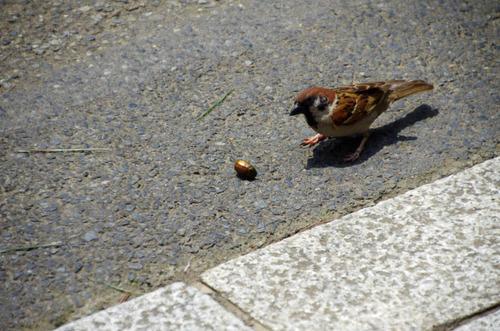 散歩道の鳥たち2013-12