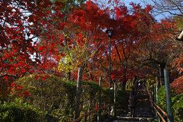 百草園の紅葉-S8