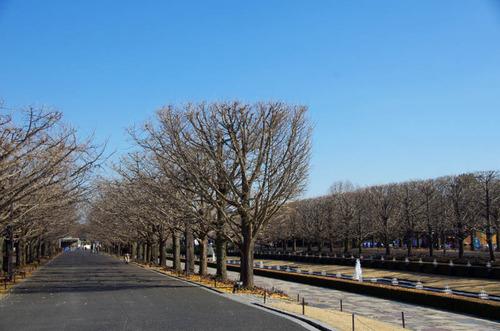 昭和記念公園イルミネーション-14