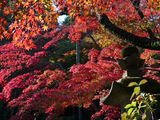 高幡不動尊20091115-4