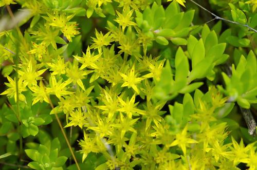 河川敷の花201106-3