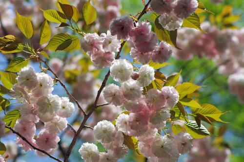 昭和記念公園201204-8