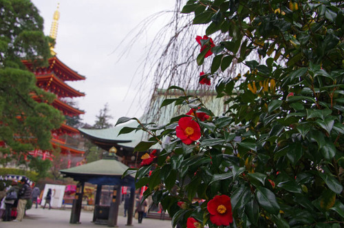 高幡不動20120226-1
