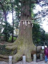 高尾山0420蛸杉