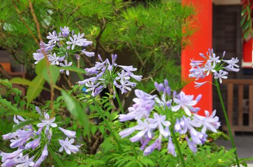 高幡不動201407-3
