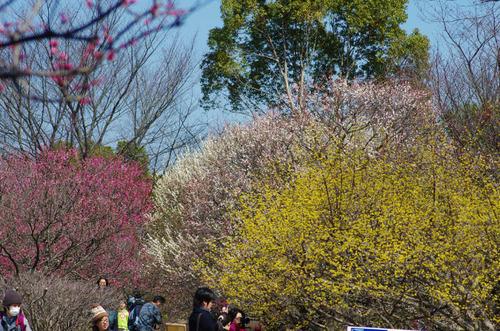 昭和記念公園201403-3