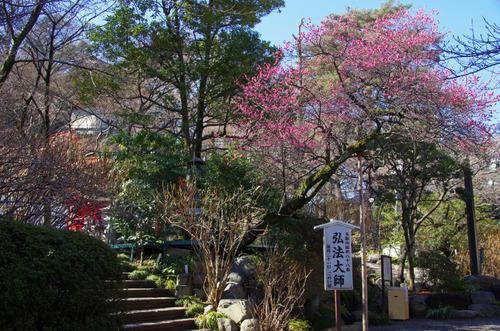 高幡不動尊20110213-10