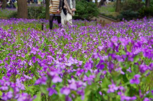 昭和記念公園201204-9