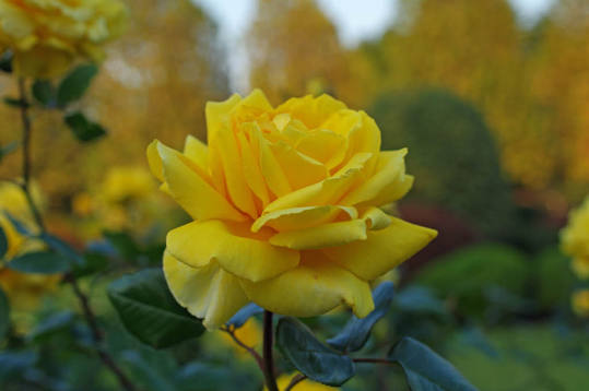 新宿御苑の秋2-2ジーナロロブリジーダ