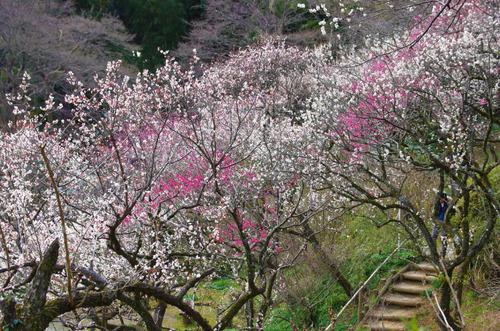 京王百草園201503-3
