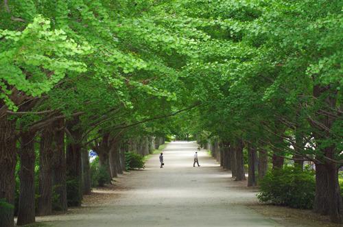 昭和記念公園201107-14