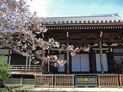 高幡不動尊の桜090329-3