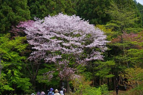 高尾山20110430-7