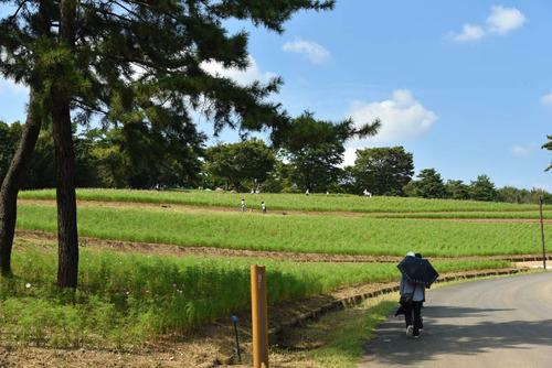 昭和記念公園201509-7
