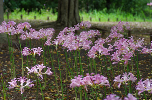 昭和記念公園201208-3