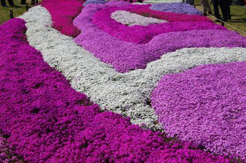 昭和記念公園201104-11