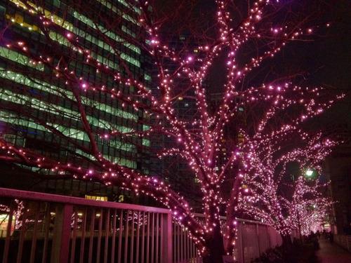 目黒川冬の桜201112-4