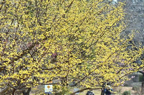 昭和記念公園201602-5