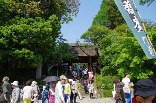 神代植物公園201305-9