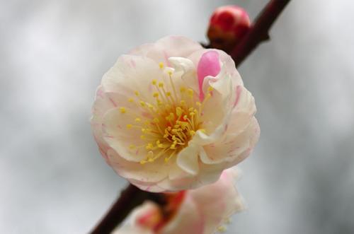 高幡不動201102-12