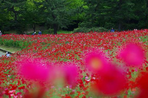 昭和記念公園201305-7