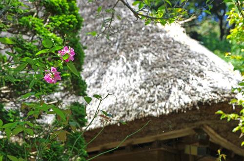 京王百草園201409-4